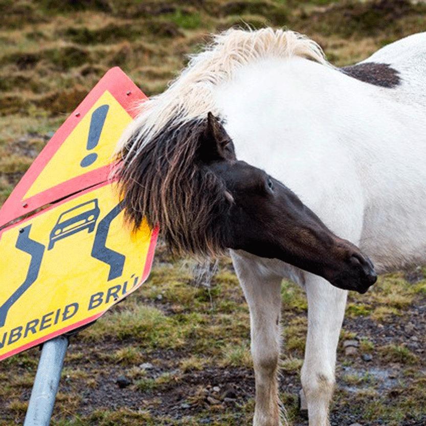 Huid - Vacht - Paard