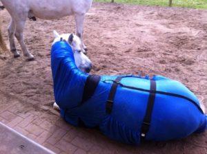 Zomereczeem bij paarden