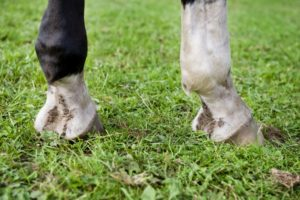 Mok bij paarden