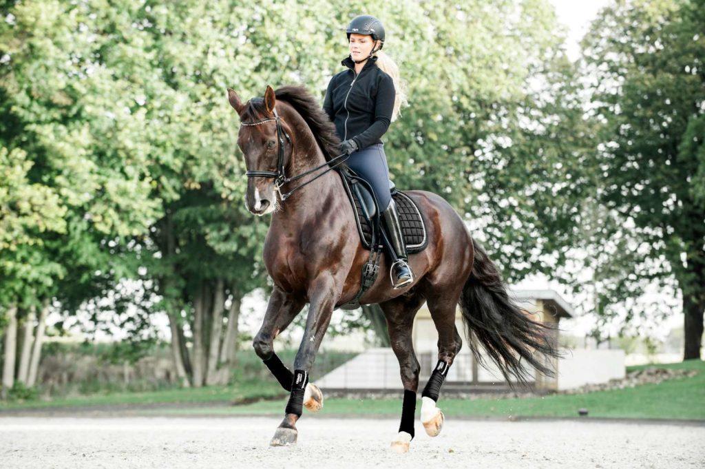 Catago Equestrian