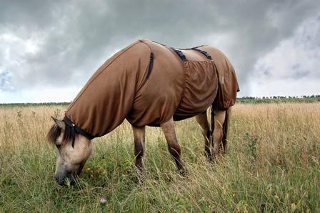 Zomereczeem-sme-paarden