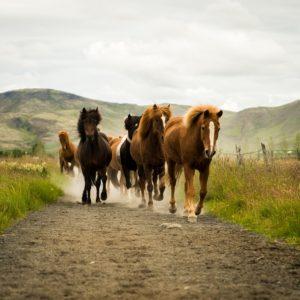 Apotheek paard