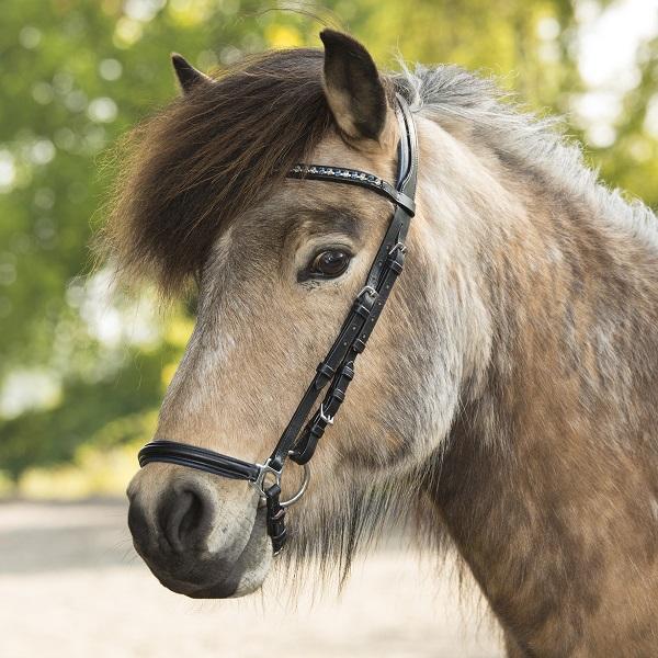 Atorka Blog Paard