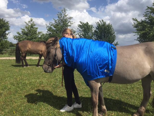 Halsdeken voor je paard zomereczeem
