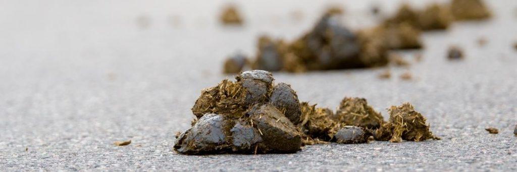 Heeft je paard zand gegeten