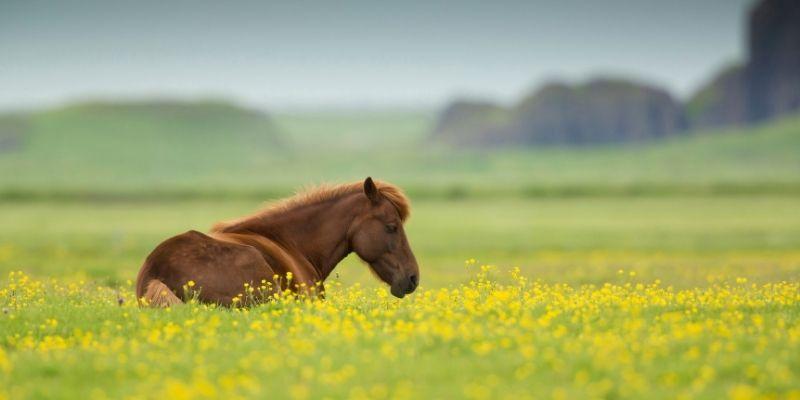 Paard het land op