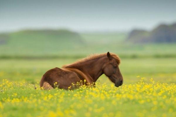 Blog paarden op het land