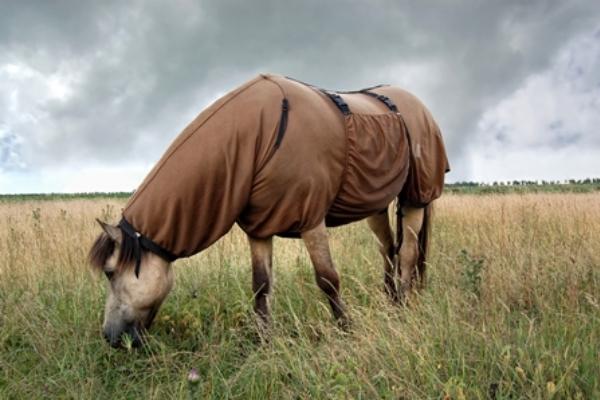 Blog Een eczeemdeken aan doen bij je paard