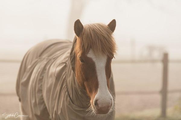 Happy-Horse-happy-skin