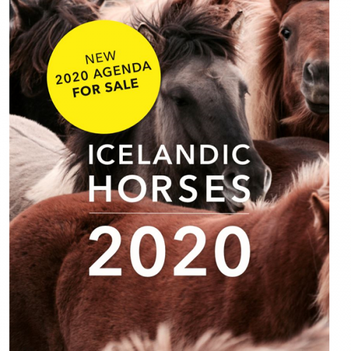 New Icelandic Horse Agenda for sale